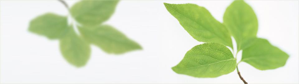 農林緑化の新栄商事